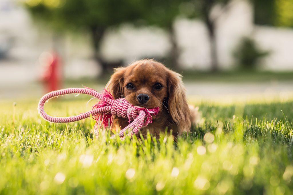 Hondengedragsadvies