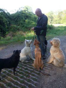 Uitlaatsevice Aikidogs